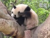 点击观看可爱熊猫2013年终盘点
