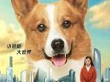 《一条叫王子的狗》高清完整版中字免费观看