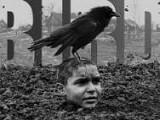 《被涂污的鸟》预告,沉重呼吸声背后有何故事